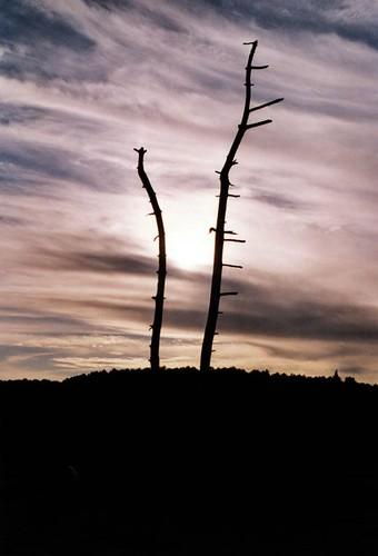 Arès-arbre mort