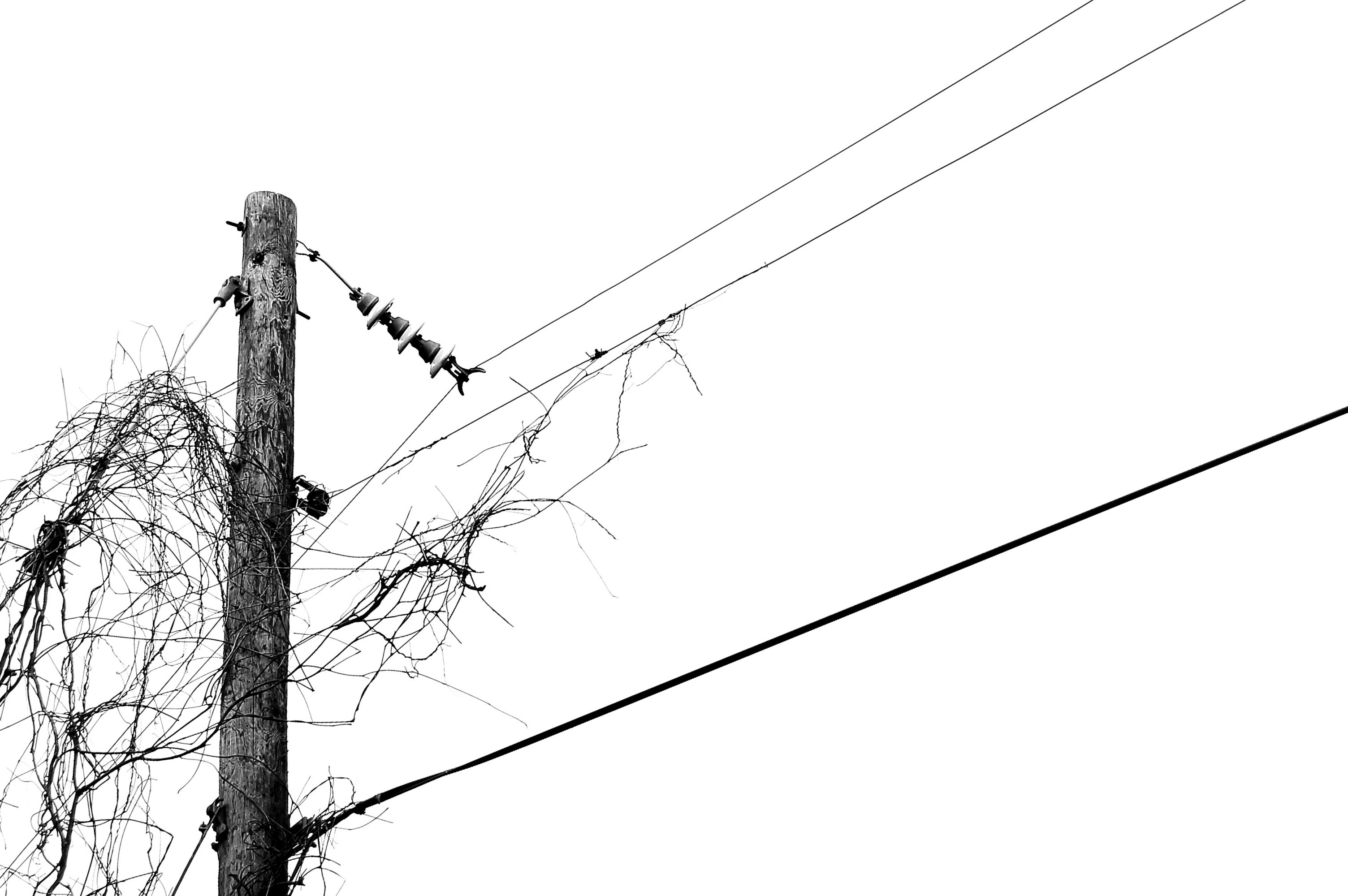 A Pole A Vine And Three Wires Of Electricty