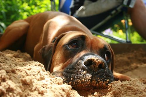 Levee sulks in the sand