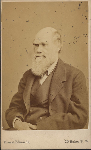 Portrait of Charles Robert Darwin (1809-1882), Biologist