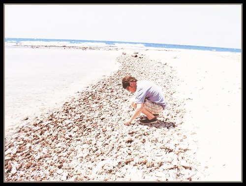 searching for  shells 2 by mpgarascia
