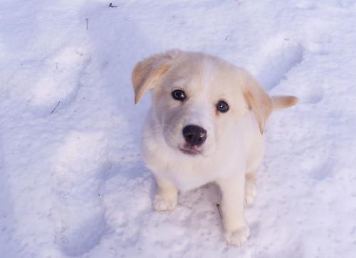 Ella the Snow Dog