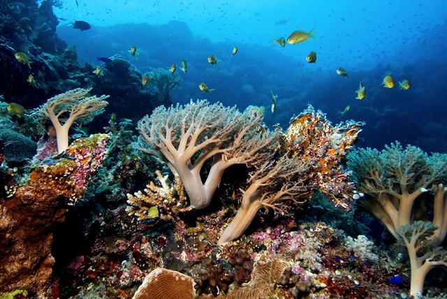 Tubbaraha Reef