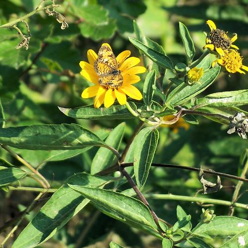 tiny butterfly.jpg