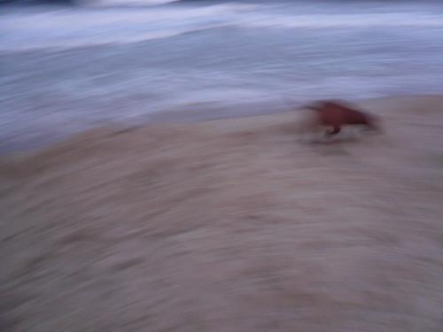 RSiegel_Week5 - Blurr on the beach