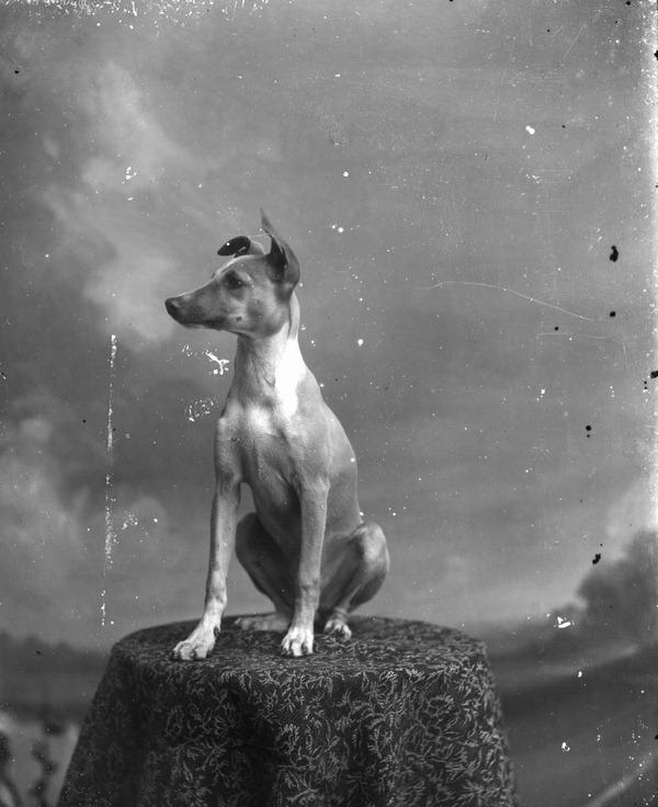 Dog posing on table