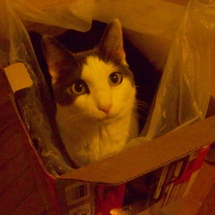 Aremid in a box (2008)