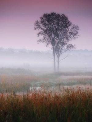 Misty autumn dawn from Flickr via Wylio