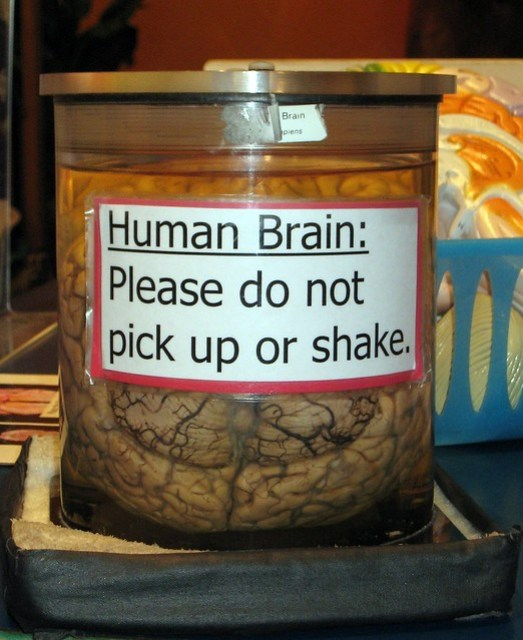 Human Brain: Please do not pick up or shake