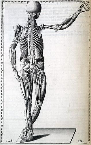 Bartolomeo Eustachi: Peripheral Nervous System, c. 1722