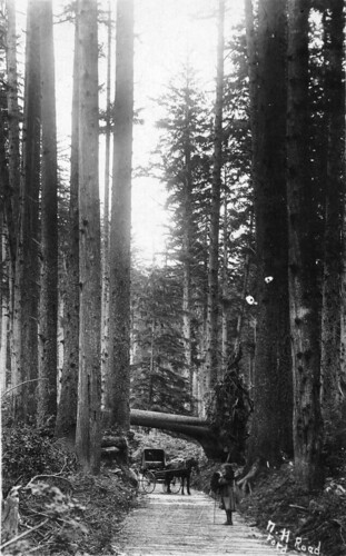 Plank road in forest in Tillamook County, Oregon