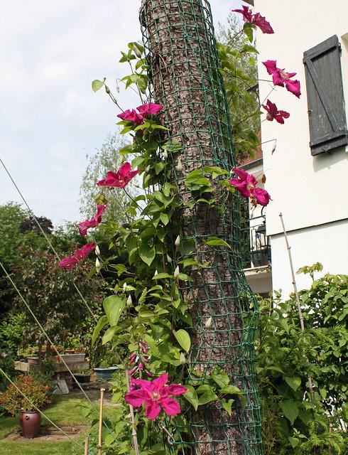 Garden Growing Games