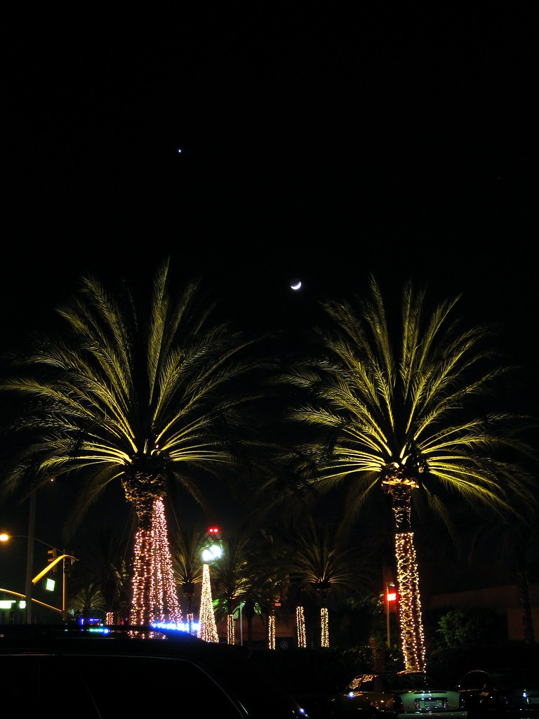 Moon and Venus Above Palm Trees