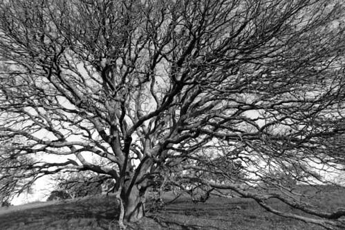 Dish-Tree1