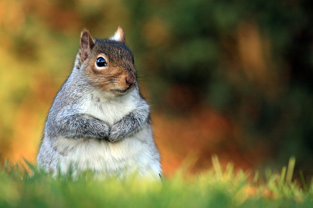 Who's eaten all the nuts?