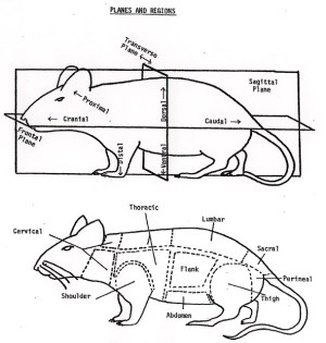 MouseDiagram | Flickr  Photo Sharing!