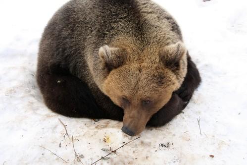 Bear by Jaanus Silla (http://www.flickr.com/people/j_silla/)