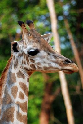Zoo Melaka 03