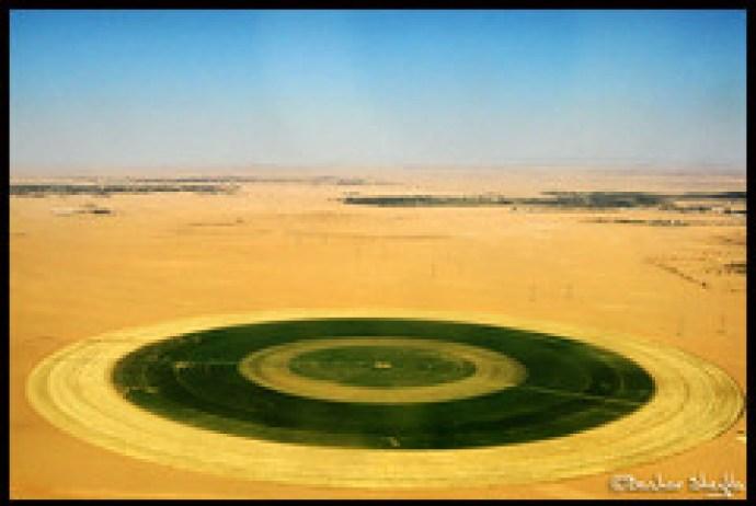 Desert-Farming!