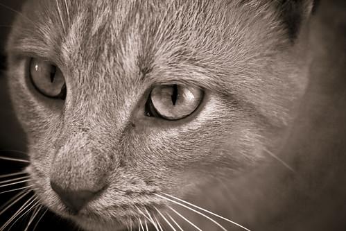 Kitten by jwill9311