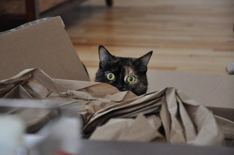 Penny Loves Paper