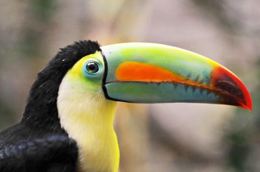The earl of Amazonia