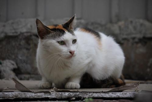 CAT_2008_0007