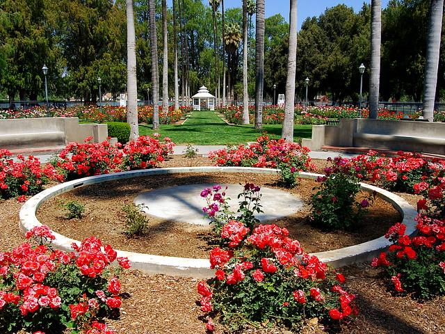 Fairmount Park Rose Garden Riverside Ca Rose Garden