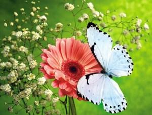 Butterflies 1989-2009 — Unsorted  412