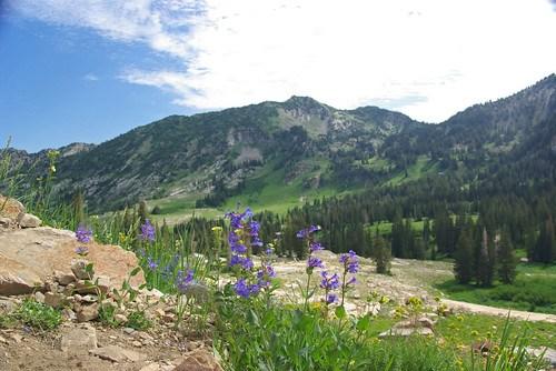Albion Basin - Alta Utah