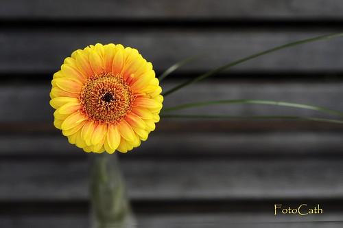 zen by FotoCath