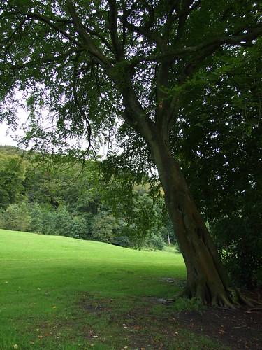 Todmorden Park 3