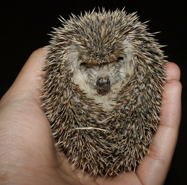 Hedgehog at Night - Chapter Two: Wallowing in the Mud