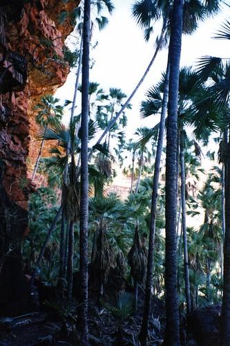 Joe's Creek Walk - Gregory National Park