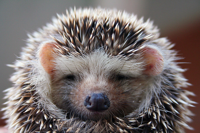 Spike the Hedgehog