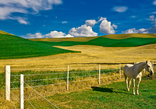 Palouse Horse Flickr Photo Sharing