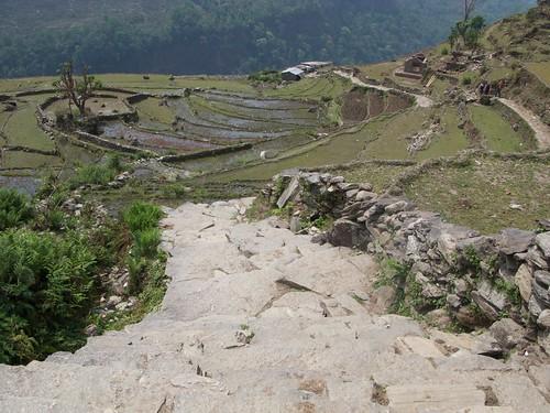 nepal 225