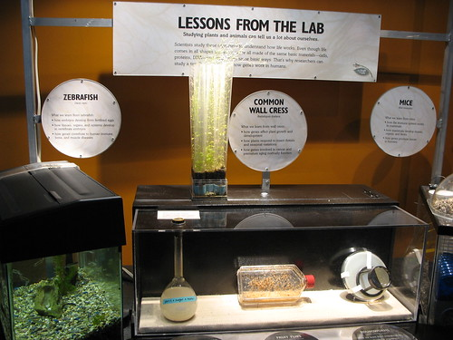 Lessons from the lab