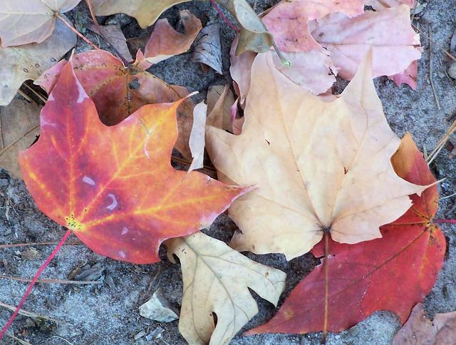 more awsome leaves.jpg