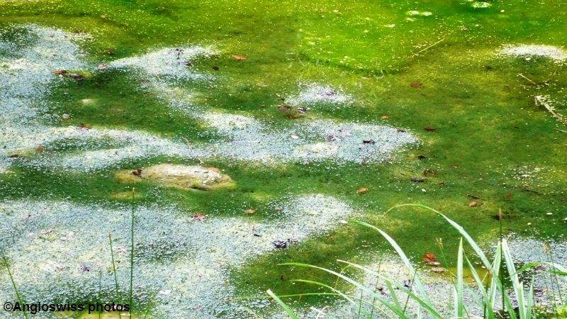 Pond in Feldbrunnen