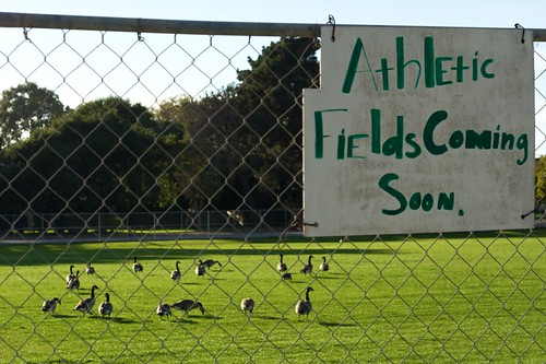 Birds preparing the Atheltic Field