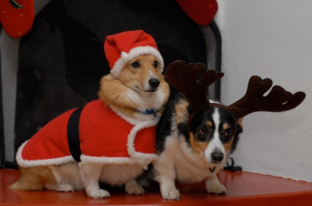 Santa Gardener and His Trusty Reindog, Koby