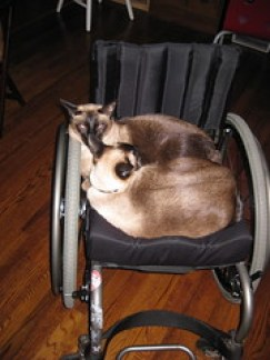 cats in chair