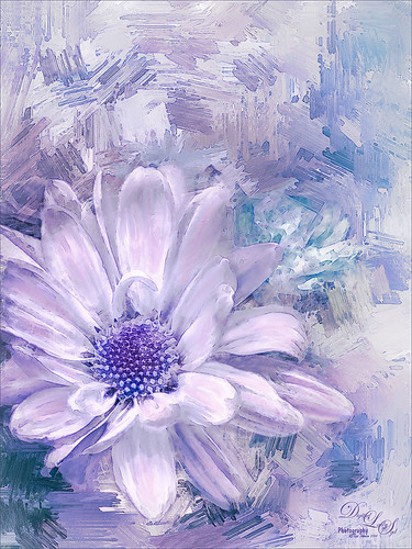 Image of a painted daisy with texture