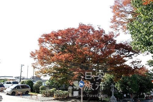 伏見稻禾大社 (3).jpg