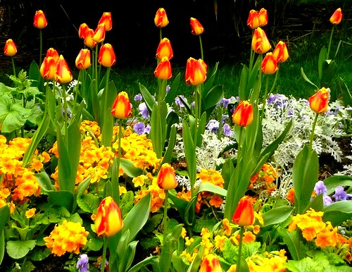 Bal des belles fleurs en joie