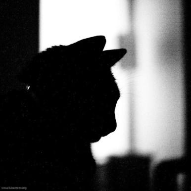 wasabi silhouette