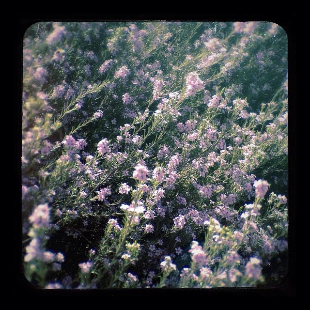 Flowers 4x Demo