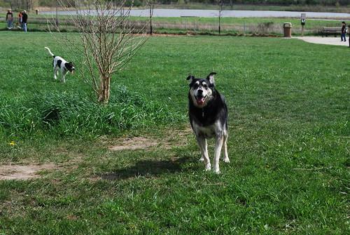 Whalon Dog Park 074