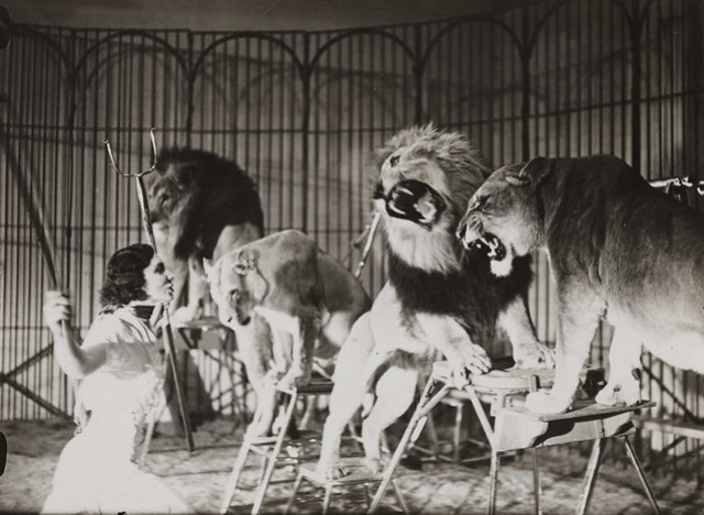 A lion tamer at Bertram Mills Touring Circus, Ascot